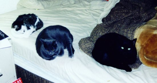 [My three cats, in 2004]